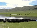 side-photo-of-nangchen-nomads