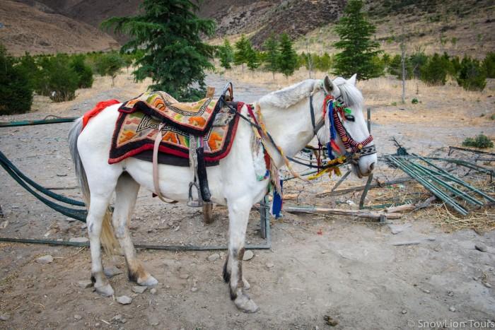 Во дворец можно доехать верхом на лошади, если тяжело подниматься самостоятельно