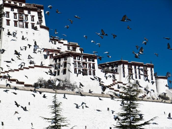 Белый дворец Поталы и голуби