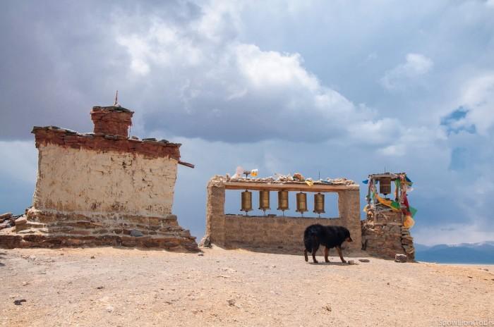 молитвенные барабаны и деревенская собака