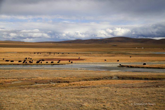 Степи в Тибете, кочевники, традиционный быт Тибета, яки, овцы, туры в Тибет, групповой тур в Тибет